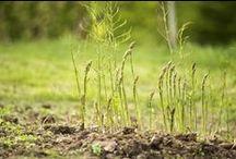 Garden Ideas / Great Garden Ideas with gardening tips and garden design