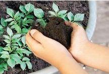 Gardening , Planting , Farming etc.