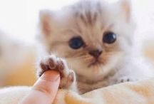 Cute and ...
