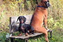 Boxers and other animals / by Lynette Lee