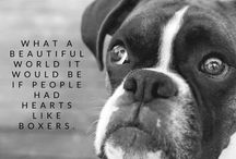 Love Pups