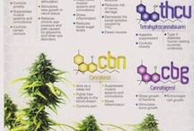 Cannabis Infographics: News you can use / Cannabis Infographics. Explanations of #MedicalMarijuana, #Cannabis, the recreational and medical pot industry, and related content in easy-to-grasp graphic poster form.