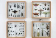 Shadow box - NATURE / Nature related collection & shadow boxes: sea shells, plants, insects, bones, etc. / by morsa (Sergio Morales T.)