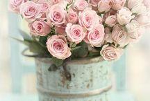 Roses for AnnaMae