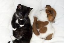 Dogs & Cats / A dynamic duo.
