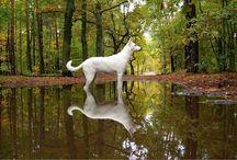 Best Friend#Alombar<3 / Dogs!