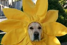 Dogs & Flowers