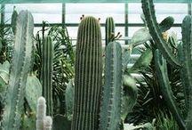 Plants / Plant - floral - green - garden - cactus