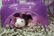 rats n mice / cutest babies ever