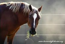 Our Mustangs! / Meet the wonderful Mustangs living at Humanity for Horses Sanctuary! To learn more, please visit our Mustang page on our website at: http://www.humanityforhorses.org/Rescued-Mustangs.html