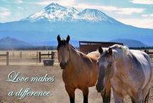 Sanctuary Quotes & Wisdoms / Inspiring, beautiful, and sometimes funny quotes featuring pictures of the animals of Humanity for Horses sanctuary!