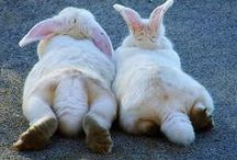 Sweet Buns / #bunnies / by Sweetly Chic