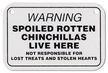 CHINCHILLA ^^