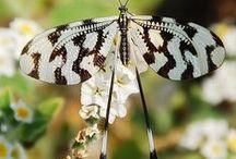 Butterflies / I love butterflies in all forms