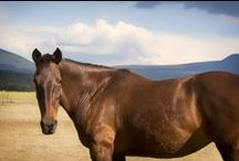 Other Breeds of Horses! / We have rescued a wide variety of horse breeds. We feel fortunate to be able to work with and help so many different types of horses! To learn more about the other breeds of horses at the sanctuary, please visit: http://www.humanityforhorses.org/OtherBreedsHorses.html