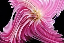 """Lovely Flowers & other plants / """"Earth laughs in flower"""" - Ralph Waldo Emerson / by beverly frey"""