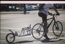 Bikes / by beverly frey