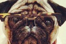 Cute Dogs-A Girl Best Friend / by beverly frey