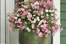 Garden - Container Gardening / by Patricia Lauder
