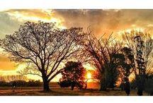 Jozi Sunsets