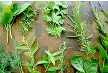 """Herbs / Herbs add spice to your life."""" / by beverly frey"""