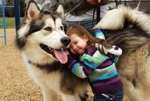Great dog / Men's best friend