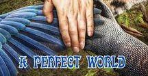 A PERFECT WORLD  ☯