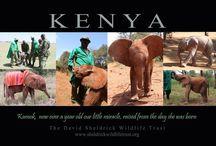 Kamok mi hija ....adopten un elefante del orfanato David Sheldrick