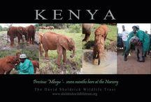 Mbegu...Mi nueva hija... Adopta tu elefante :)