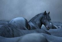 The Breath of Allah ♞♘ /  Equus ferus caballus: The Breath of Allah ♞It features an Arabian legend God created the horse a blow of his breath.