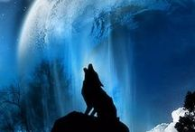 The Shadow Of The Wolf ۵