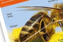 Yummy Honey / Plan your lesson using our resources and videos to help children learn about how honey is made and the bees that make it. Part of The Tesco Eat Happy Project.