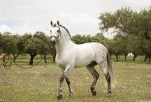 horses / horseback riding / equestrian style / by Kylie Haringa