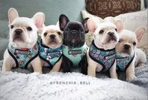 I ♥ frenchies