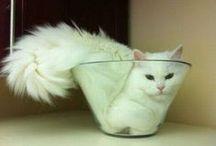 Cats Havin' Fun! / Cats Doing What They Do Best - Having Fun!