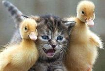 Cutie Kittens / Pictures of Very Cute Kittens