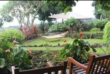 Blogs Stories - Holualoa Inn / by Holualoa Inn
