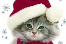 Christmas Kitties! / It's All About Cats For Christmas. Cat Lovers Gifts And More.