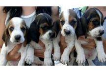 Animales y Mascotas / Compra-venta y adopción de Animales y Mascotas