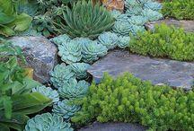 Jardin / Une peu de verdure tout autour