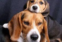 Candostlarımızour friends dogs / Candostlarımız
