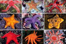 my starfish denizyıldızları  / ❤️❤️❤️love starfish denizyıldızlarını çok seviyorum