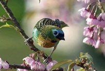 ❤️birds & kuşlar ❤️ / ❤️❤️❤️ birds & kuşlar ❤️❤️❤️