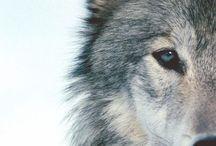 WØLVĒSŚSŠS / The best animal ever living