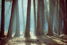 Forest of life / The most amazing, lovely, energy and cuttest forest .