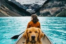 Furry Friends / Furry Friends are great companions for any explorer.