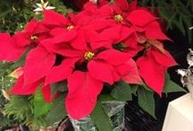 Growing For the Holidays! / Great Holiday Photos from our users!