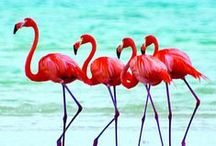 Flamingos Party