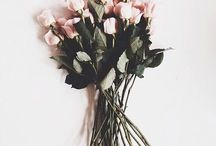 Flowers / Just love looking at flowers