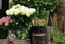 """Our flower shop / Ideas of colour and design for our flower shop. """" The Rosarie Flower Farm""""."""
